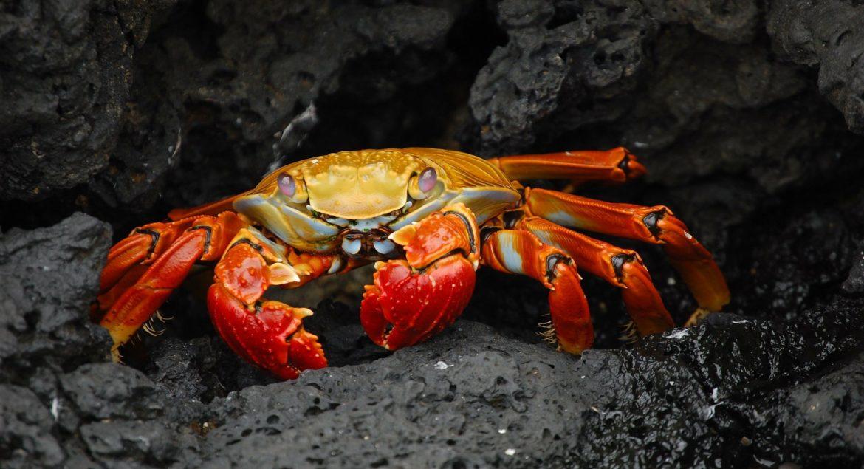 chitosan_crabe_natureAZ