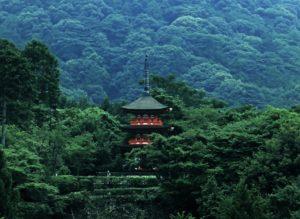 japon_konjac_natureAZ