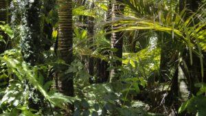 amazonie_forêt_natureAZ