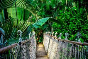 forêt_amazonienne_natureAZ