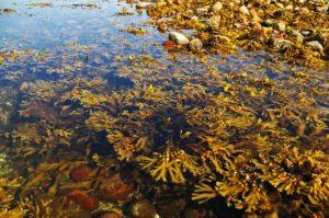 algues_natureAZ
