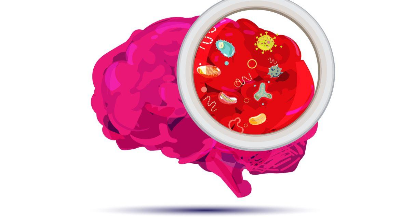 Quel est le lien entre la santé intestinale et la santé mentale?_5f157035b1dd9.jpeg