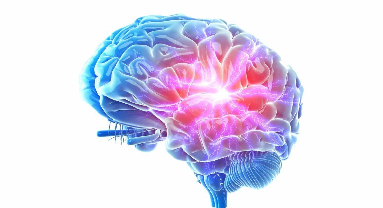 Qu'est-ce que la neurogenèse et comment est-elle liée au déclin cognitif?_5f27ed674ae03.jpeg